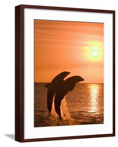 Bottlenose Dolphins, Caribbean Sea-Stuart Westmoreland-Framed Art Print