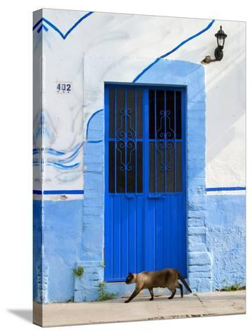 Detail of Siamese Cat in Doorway with Wrought Iron Cover, Puerto Vallarta, Mexico-Nancy & Steve Ross-Stretched Canvas Print