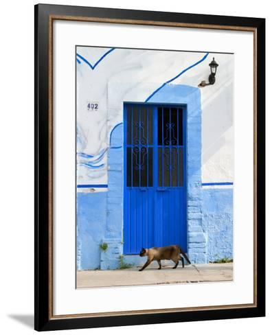 Detail of Siamese Cat in Doorway with Wrought Iron Cover, Puerto Vallarta, Mexico-Nancy & Steve Ross-Framed Art Print