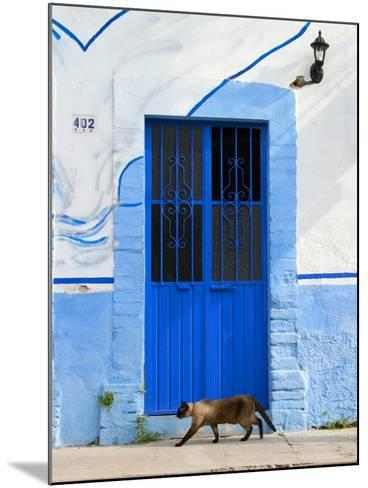 Detail of Siamese Cat in Doorway with Wrought Iron Cover, Puerto Vallarta, Mexico-Nancy & Steve Ross-Mounted Photographic Print