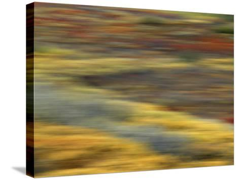 Colorful Abstract of Autumn Tundra Colors, Denali National Park, Alaska, USA-Arthur Morris-Stretched Canvas Print
