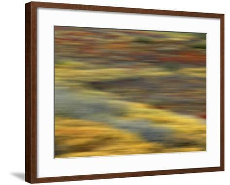 Colorful Abstract of Autumn Tundra Colors, Denali National Park, Alaska, USA-Arthur Morris-Framed Art Print