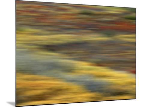 Colorful Abstract of Autumn Tundra Colors, Denali National Park, Alaska, USA-Arthur Morris-Mounted Photographic Print