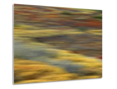 Colorful Abstract of Autumn Tundra Colors, Denali National Park, Alaska, USA-Arthur Morris-Metal Print