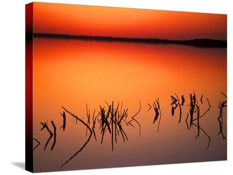 Sunset Silhouettes of Dead Tree Branches Through Water on Lake Apopka, Florida, USA-Arthur Morris-Stretched Canvas Print