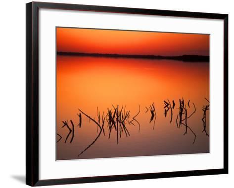 Sunset Silhouettes of Dead Tree Branches Through Water on Lake Apopka, Florida, USA-Arthur Morris-Framed Art Print