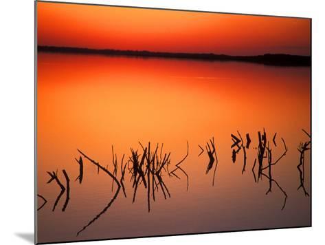 Sunset Silhouettes of Dead Tree Branches Through Water on Lake Apopka, Florida, USA-Arthur Morris-Mounted Photographic Print