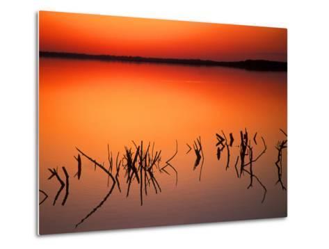 Sunset Silhouettes of Dead Tree Branches Through Water on Lake Apopka, Florida, USA-Arthur Morris-Metal Print