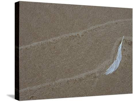 Gull Feather and Wave Lines on Lake Michigan Beach, Michigan, USA-Mark Carlson-Stretched Canvas Print