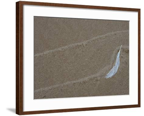 Gull Feather and Wave Lines on Lake Michigan Beach, Michigan, USA-Mark Carlson-Framed Art Print