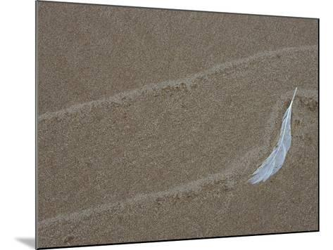 Gull Feather and Wave Lines on Lake Michigan Beach, Michigan, USA-Mark Carlson-Mounted Photographic Print