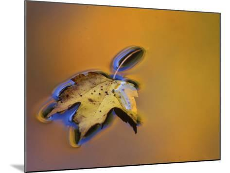 Maple Leaf Floating on Water Surface with Autumn Reflections, Michigan, USA-Mark Carlson-Mounted Photographic Print