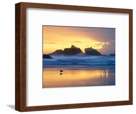 Beach at Sunset with Sea Stacks and Gull, Bandon, Oregon, USA-Nancy Rotenberg-Framed Art Print