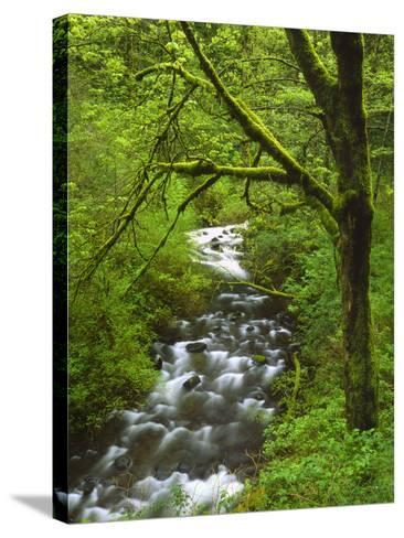 Bridal Veil Creek Flowing Through Forest in Springtime, Mt. Hood National Forest-Steve Terrill-Stretched Canvas Print