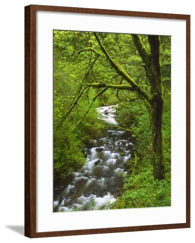 Bridal Veil Creek Flowing Through Forest in Springtime, Mt. Hood National Forest-Steve Terrill-Framed Art Print