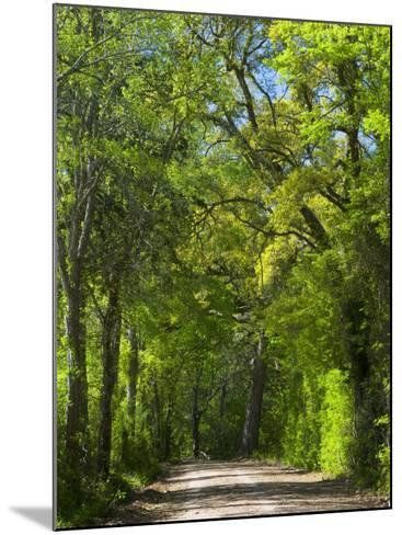 Dirt Roadway Overhanging with Greens of Oak Trees Near Independence, Texas, USA-Darrell Gulin-Mounted Photographic Print