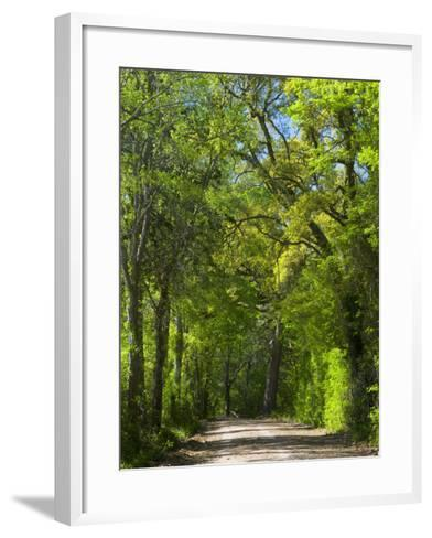Dirt Roadway Overhanging with Greens of Oak Trees Near Independence, Texas, USA-Darrell Gulin-Framed Art Print
