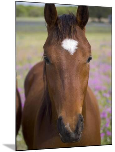 Quarter Horse in Wildflowers, Devine, Texas, USA-Darrell Gulin-Mounted Photographic Print