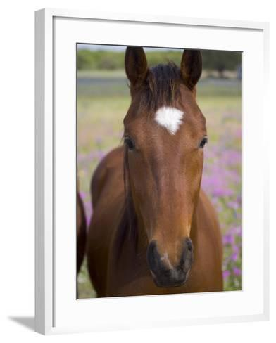 Quarter Horse in Wildflowers, Devine, Texas, USA-Darrell Gulin-Framed Art Print