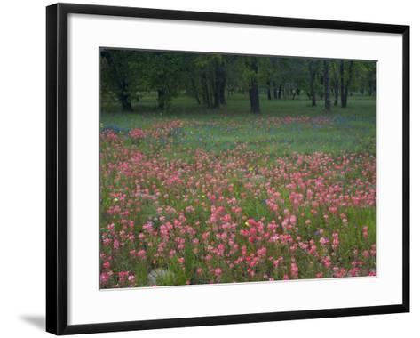Field of Texas Blue Bonnets, Phlox and Oak Trees, Devine, Texas, USA-Darrell Gulin-Framed Art Print