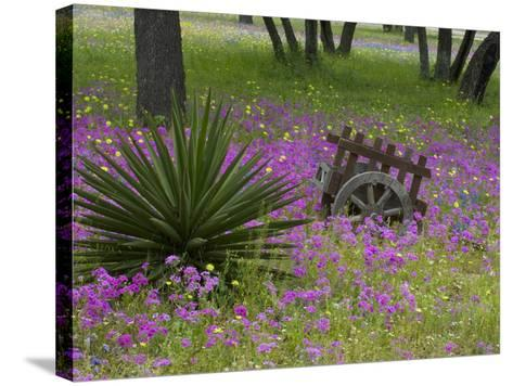 Wooden Cart in Field of Phlox, Blue Bonnets, and Oak Trees, Near Devine, Texas, USA-Darrell Gulin-Stretched Canvas Print