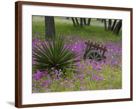 Wooden Cart in Field of Phlox, Blue Bonnets, and Oak Trees, Near Devine, Texas, USA-Darrell Gulin-Framed Art Print
