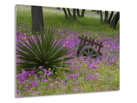 Wooden Cart in Field of Phlox, Blue Bonnets, and Oak Trees, Near Devine, Texas, USA-Darrell Gulin-Metal Print