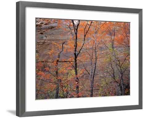 Fall Color in Zion National Park, Utah, USA-Diane Johnson-Framed Art Print
