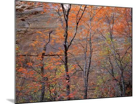 Fall Color in Zion National Park, Utah, USA-Diane Johnson-Mounted Photographic Print