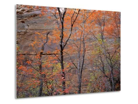 Fall Color in Zion National Park, Utah, USA-Diane Johnson-Metal Print