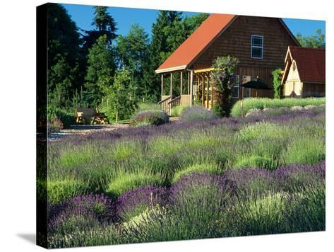 Lavender Field and Gift Shop, Sequim, Washington, USA-Jamie & Judy Wild-Stretched Canvas Print