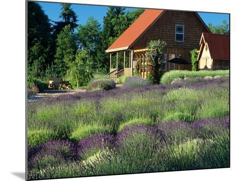 Lavender Field and Gift Shop, Sequim, Washington, USA-Jamie & Judy Wild-Mounted Photographic Print