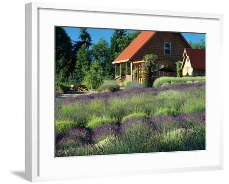 Lavender Field and Gift Shop, Sequim, Washington, USA-Jamie & Judy Wild-Framed Art Print