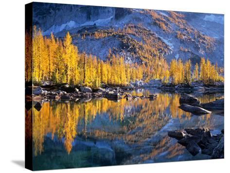 Golden Larch Trees Reflected in Leprechaun Lake, Enchantment Lakes, Alpine Lakes Wilderness-Jamie & Judy Wild-Stretched Canvas Print