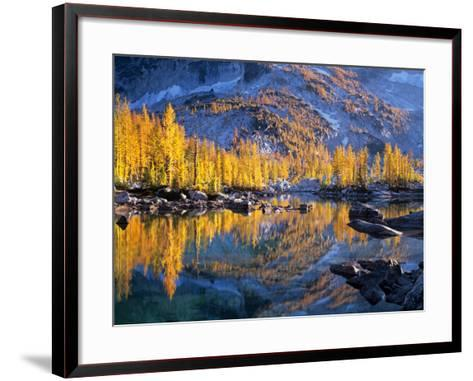 Golden Larch Trees Reflected in Leprechaun Lake, Enchantment Lakes, Alpine Lakes Wilderness-Jamie & Judy Wild-Framed Art Print