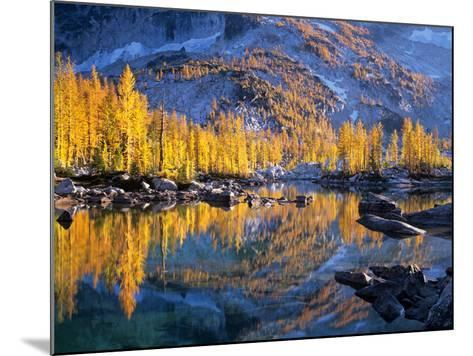 Golden Larch Trees Reflected in Leprechaun Lake, Enchantment Lakes, Alpine Lakes Wilderness-Jamie & Judy Wild-Mounted Photographic Print