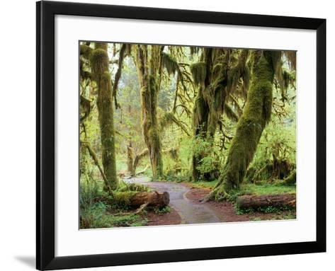 Hall of Mosses and Trail, Big Leaf Maple Trees and Oregon Selaginella Moss, Hoh Rain Forest-Jamie & Judy Wild-Framed Art Print