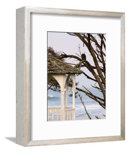 Eagle Perched at Entrance to Beach Trail, Kalaloch Lodge, Olympic National Park, Washington, USA-Trish Drury-Framed Art Print