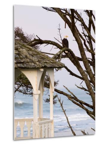 Eagle Perched at Entrance to Beach Trail, Kalaloch Lodge, Olympic National Park, Washington, USA-Trish Drury-Metal Print