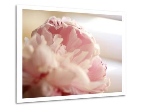 Sweet Flower II-Nicole Katano-Metal Print
