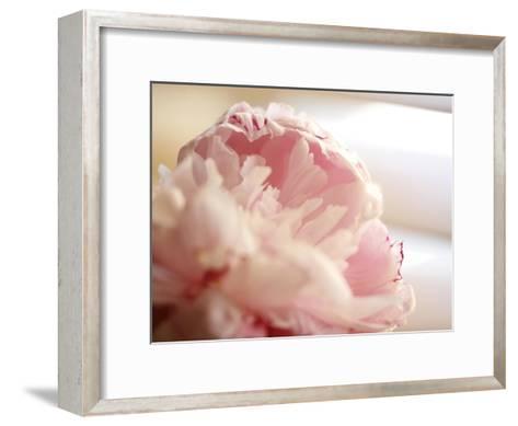 Sweet Flower II-Nicole Katano-Framed Art Print