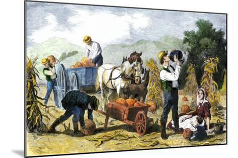 Gathering Pumpkins, an October Scene in New England, c.1860--Mounted Giclee Print