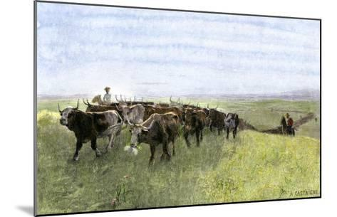 Cowboys Driving a Longhorn Herd on the Great Cattle Trail 1800--Mounted Giclee Print
