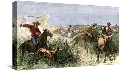 Cowboys Cutting Out Cattle to Drive a Herd from Texas to Kansas, c.1870--Stretched Canvas Print