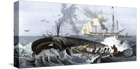Long Boat Crew Harpooning a Whale--Stretched Canvas Print