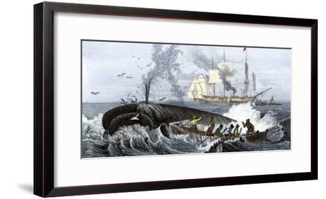 Long Boat Crew Harpooning a Whale--Framed Art Print