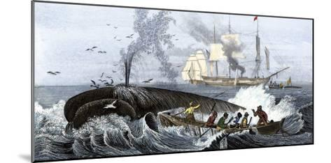 Long Boat Crew Harpooning a Whale--Mounted Giclee Print