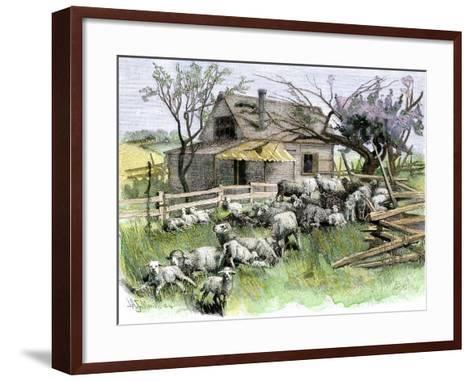 Sheep Near a Cottage in West Rutland, Vermont, c.1880--Framed Art Print