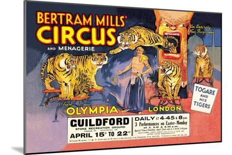 Togare and his Tigers: Bertram Mills' Circus and Menagerie--Mounted Art Print