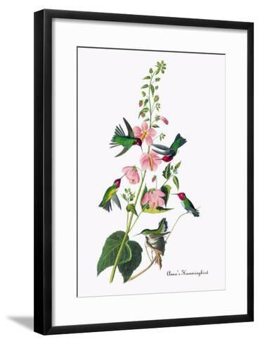 Anna's Hummingbird-John James Audubon-Framed Art Print